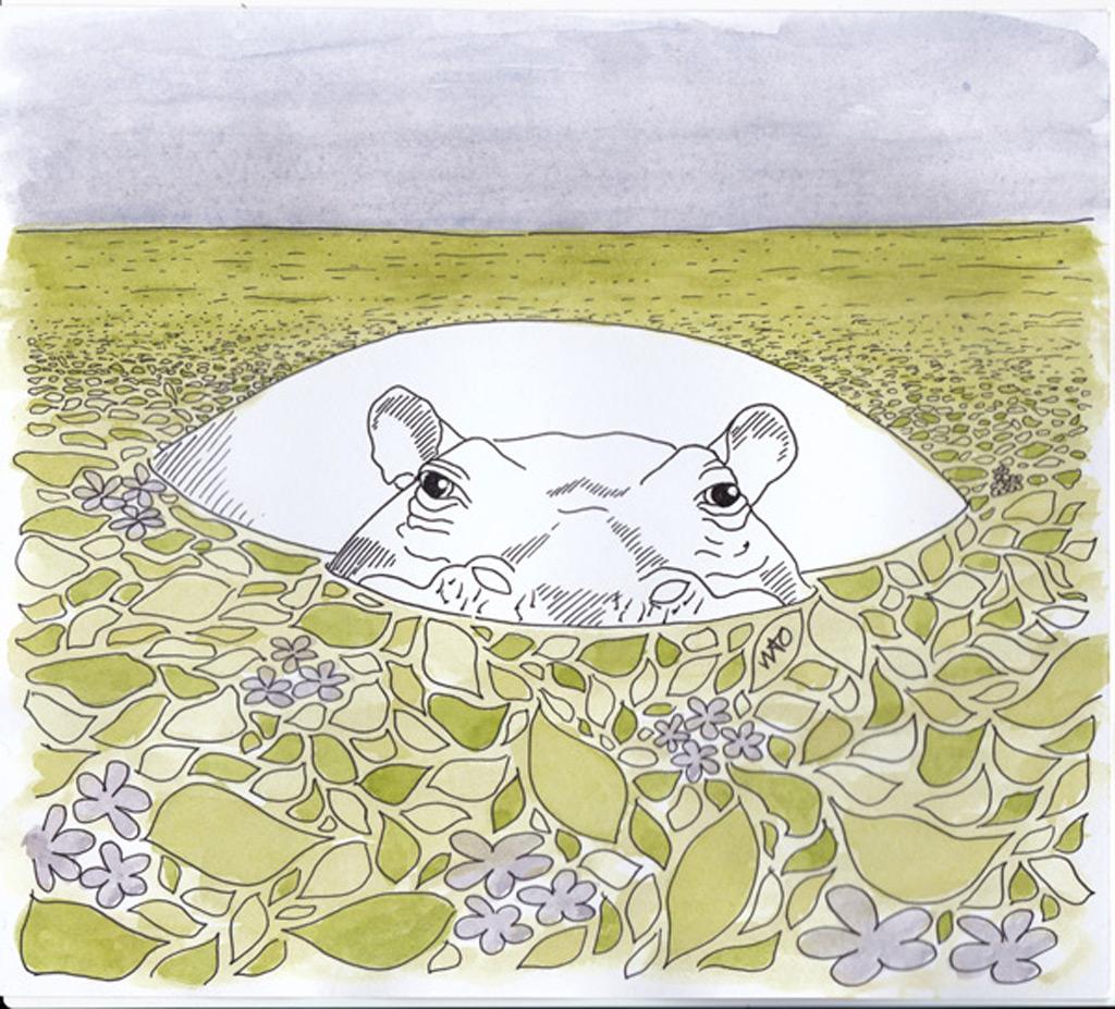 hippo flodhest illustration