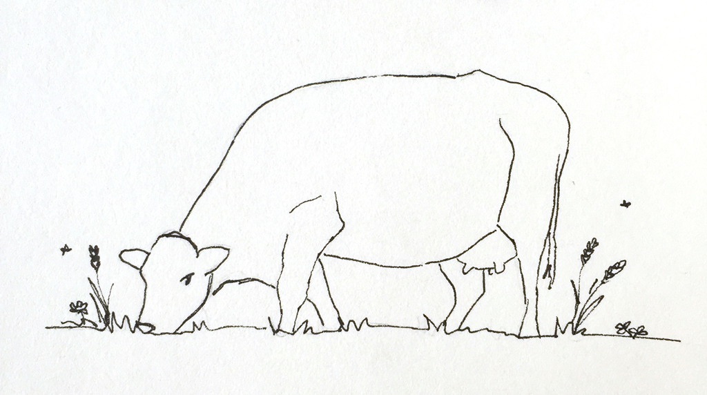 ko cow illustration simple