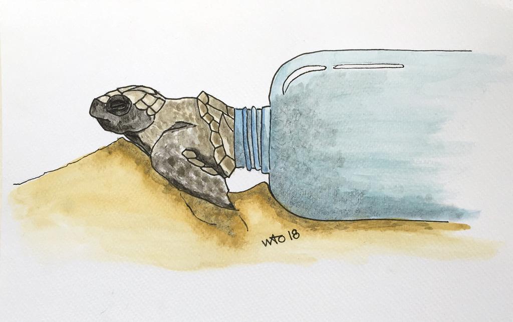 turtle skildpadde forurening plastic illustration
