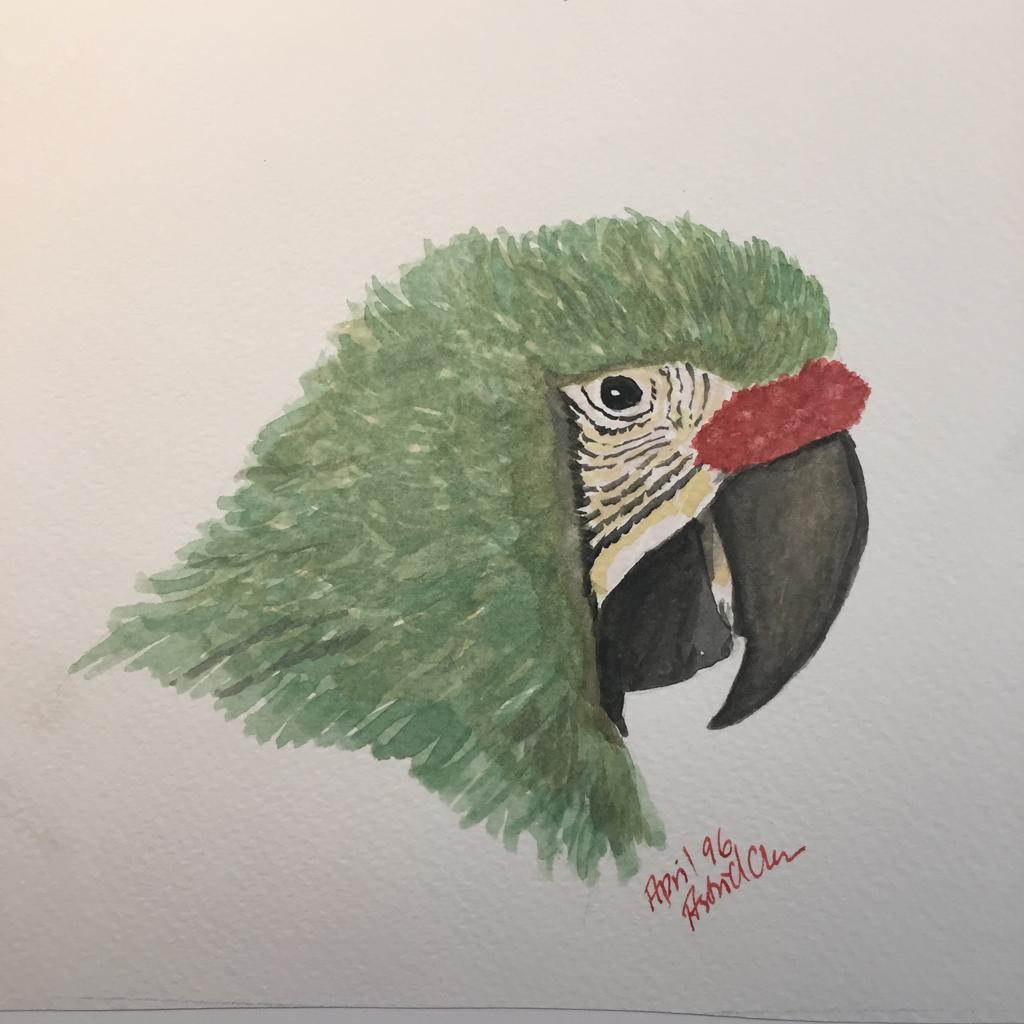 ara akvarel illustration